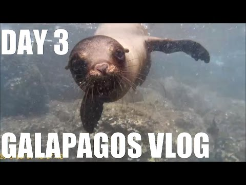 GALAPAGOS TRAVEL VLOG DAY 3: SWIMMING WITH SEA LIONS!