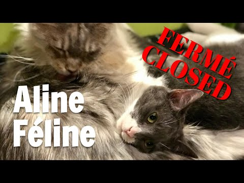 The eight adorable cats at Aline Féline | Les huit chats adorables chez Aline Féline
