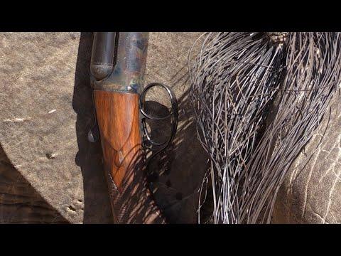 Buffalo / Tuskless (Elephant) Hunting Safari – Steve's Promo
