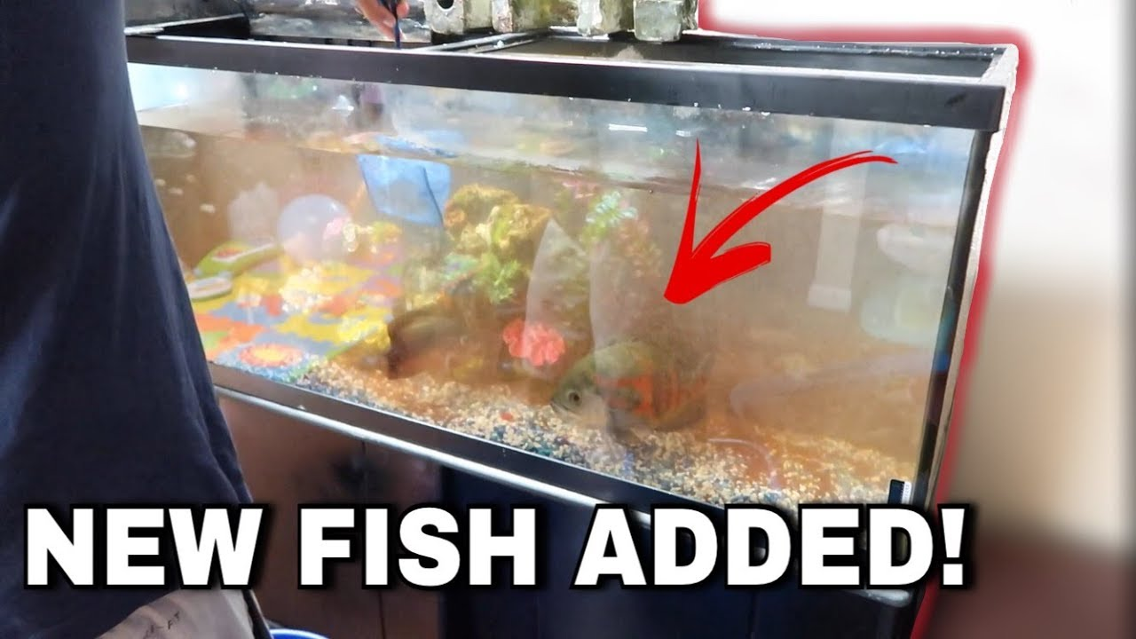 buying-a-new-fish