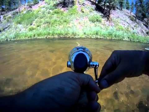 South platte river rainbow deckers colorado fish creek for Deckers co fishing report