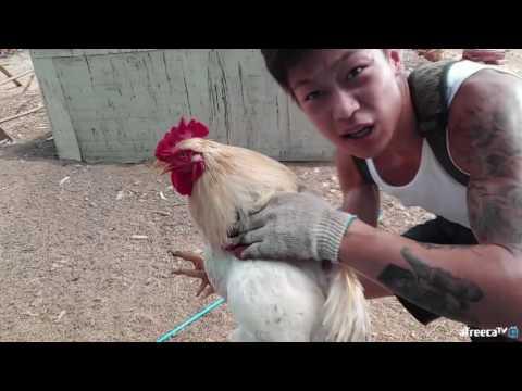 윽박::말복기념! 자급자족 닭잡아서 백숙해먹기!!!(feat.베프 닭)