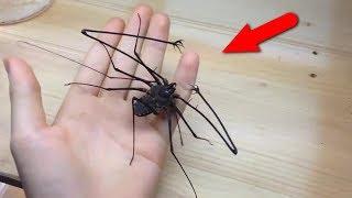 Самые странные и жуткие насекомые. С ними лучше не встречаться!