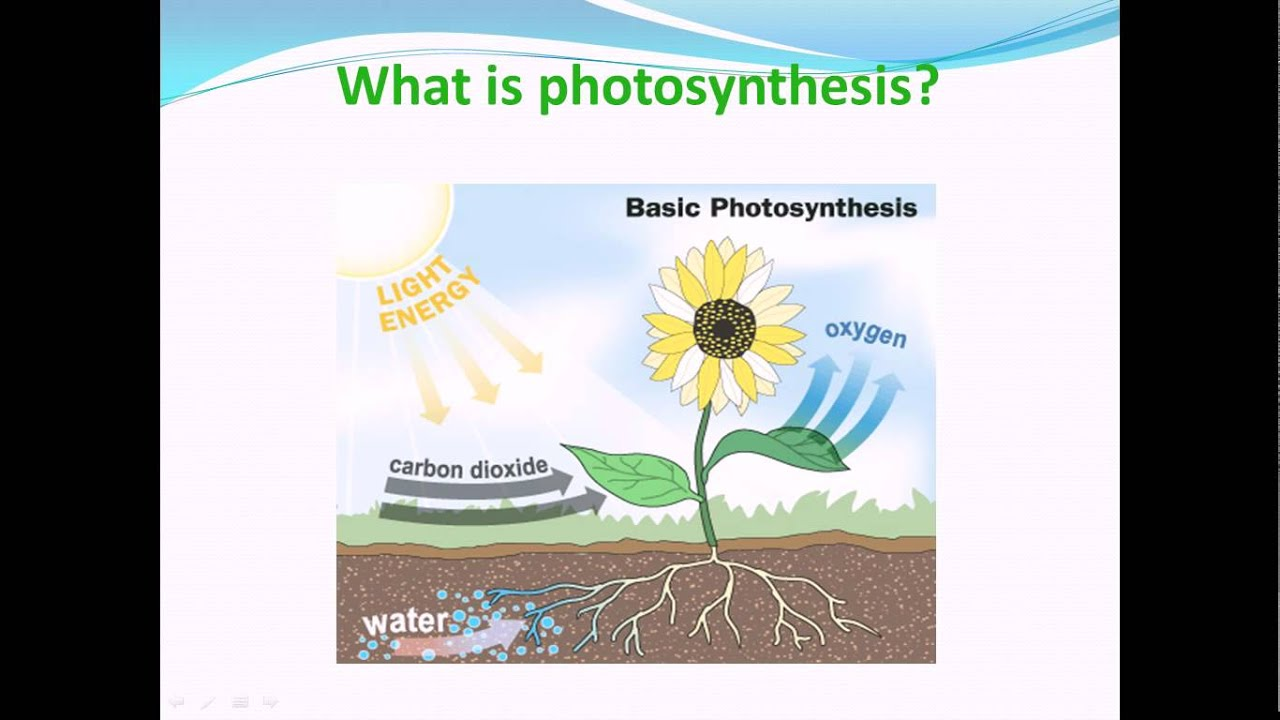 What is photosynthesis nutrition in plants science cbse class vii what is photosynthesis nutrition in plants science cbse class vii youtube ccuart