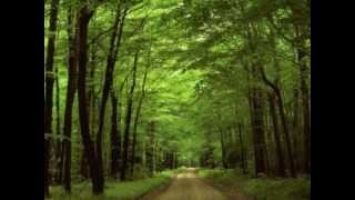 Relax music, Nature, Instrumental Melody