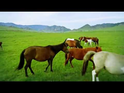 10 Places Tourist Attraction in Mongolia