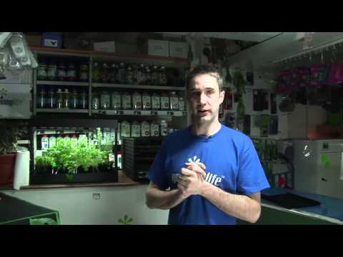 How To Store Basil