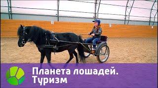 Планета лошадей. Туризм   Живая Планета