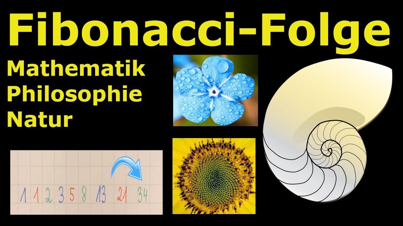 Fibonacci Folge Natur