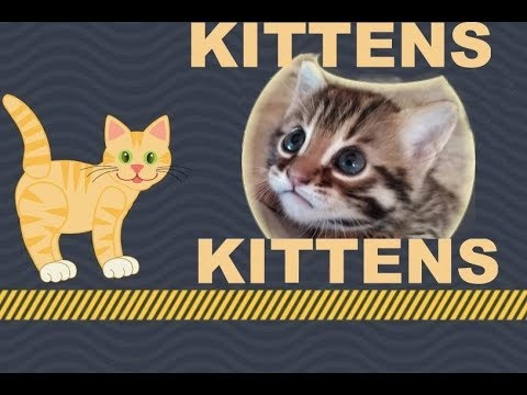 Bengal Cats React To : CUTE TINY MUNCHKIN KITTENS Compilation Funny Videos Cat Fails 2019 - Ep.17