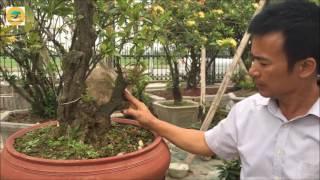 VUA MẪU ĐƠN- VƯỜN CÂY TRƯỜNG PHỦ-Nơi giao lưu cây cảnh nghệ thuật - #1 Nam Định