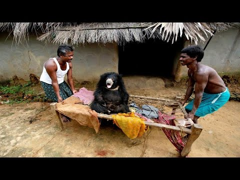 Animals Enter into Villages from Forest For Food and Water