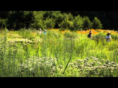 Native Plant Garden Meadow