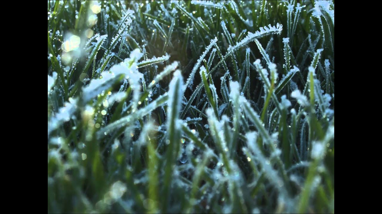 Melt Away- a time lapse movie of frost on grass melting ...