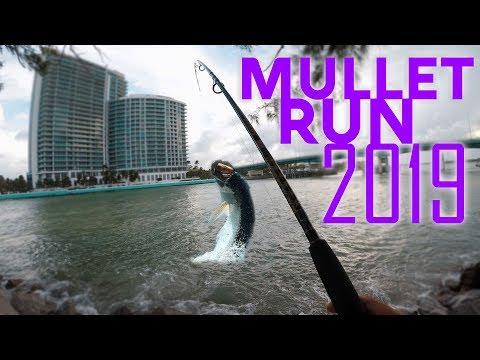 Mullet Run 2019 - Chasing Mullet In South Florida