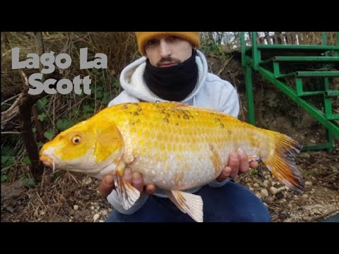 Lago LA SCOTT | Aggiornamento Weekend CARPFISHING #1