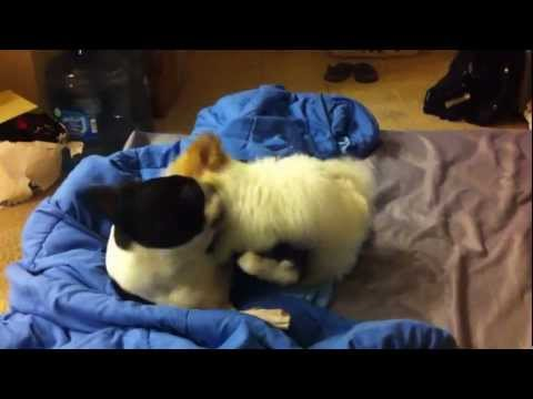 Cute and deadly killer dog attack