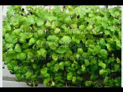 Sprouts - Healthy Food Solution
