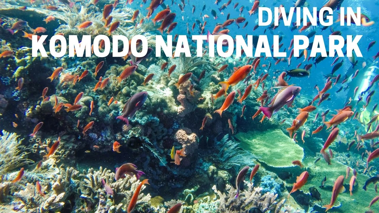 Scuba Diving In Komodo National Park Indonesia Youtube