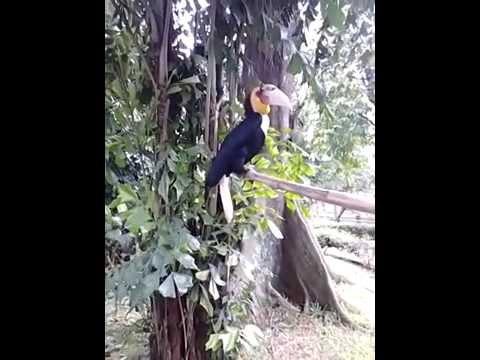 Big bird on TMII (burung rangkong Indonesia)