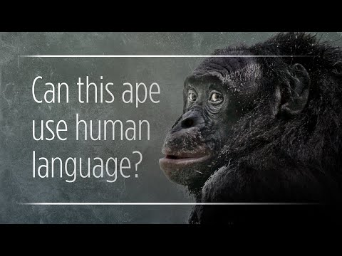 Can Apes Really