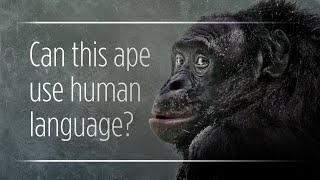 "Can Apes Really ""Talk"" To Humans?"