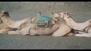 Lanzarote beach holiday strand vakantie vulcan vulkaan lava camels kamelen geiser stoom europe