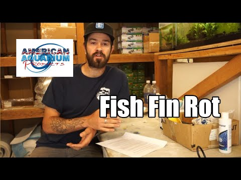 Fish Fin Rot Treatment | How To Cure Fin Rot