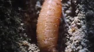 Дикая Природа   Ядовитые пауки и насекомые  BBC