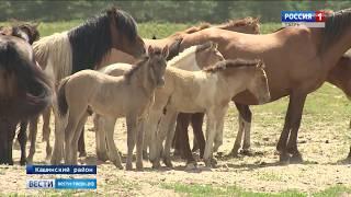 В Кашинском районе разводят редкие для региона породы лошадей