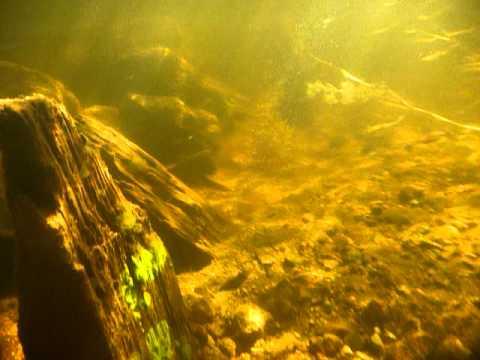 Old Submerged Dam (Underwater)