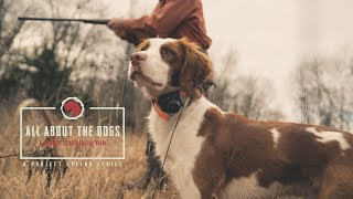 All About the Dogs  An American Brittany Story  Project Upland