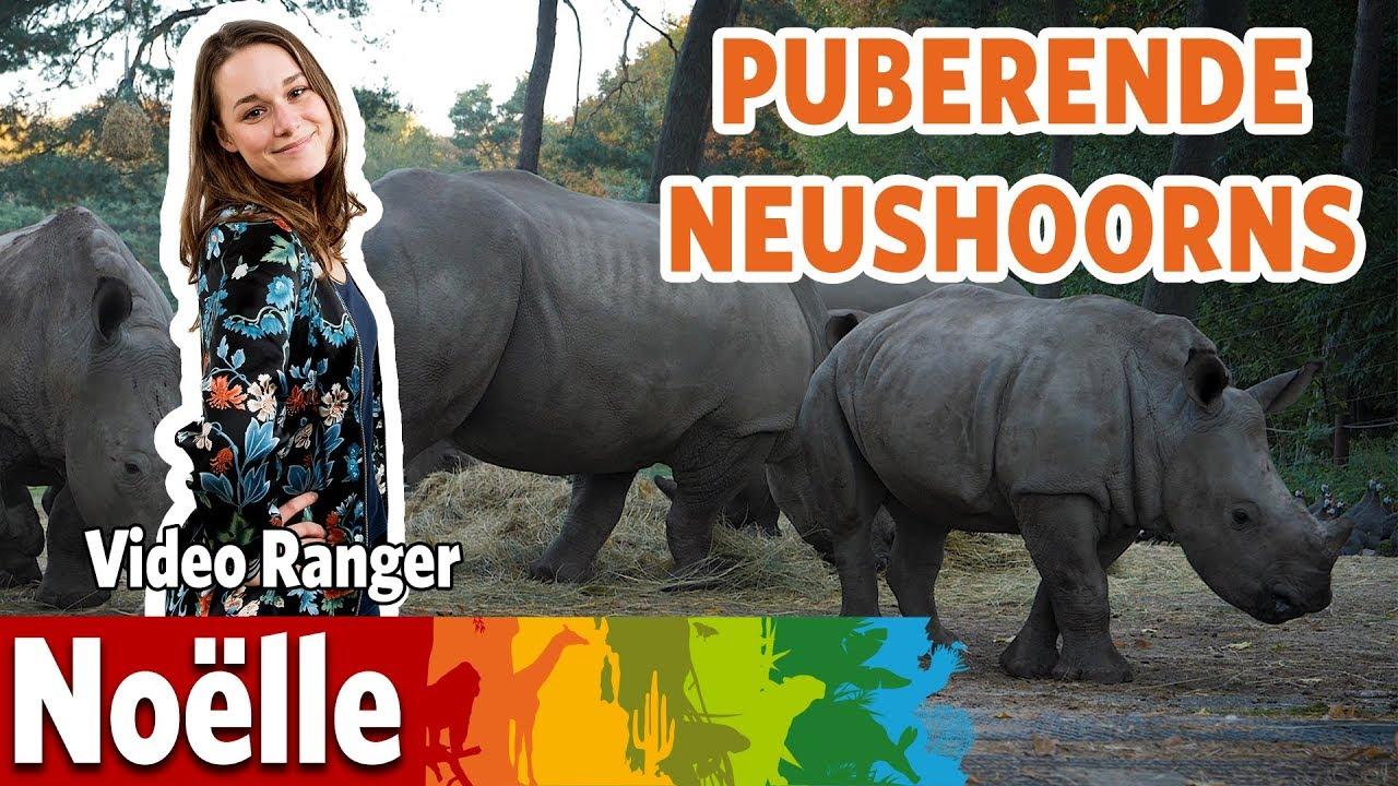 Puberende neushoorns?!