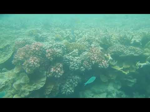 Great Barrier Reef Feb 2018