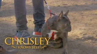 Season 5, Episode 5: 'Lilo's Training Session is a Disaster'   Chrisley Knows Best