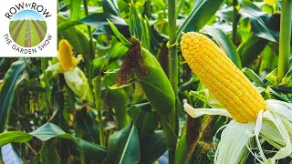 WHAT CROPS SHOULD YOU PLANT AGAIN IN THE FALL?