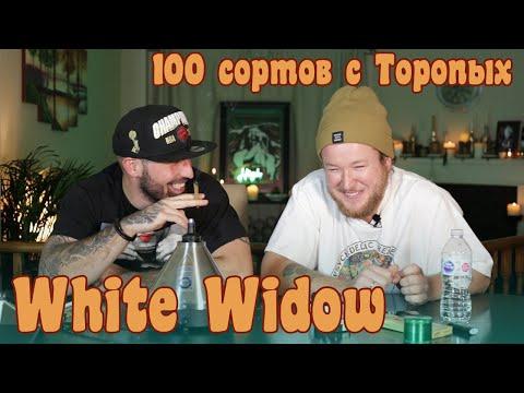 100 Сортов: White