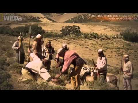 And Man Created Dogs   Dogs Origin History Documentary Full HD 1080p