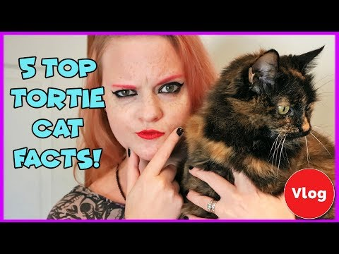 Top 5 Interesting Facts About Tortoishell Cats! What's Cool About Having A Tortie Cat?