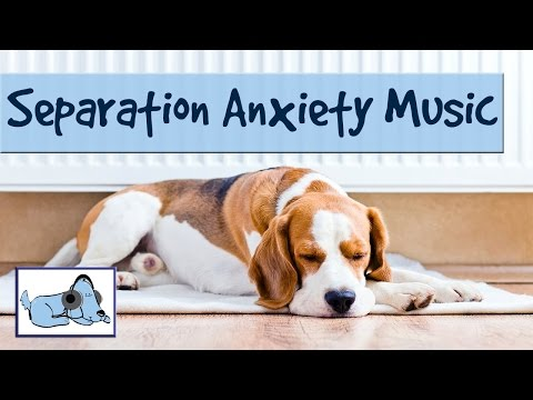 dog-music-to-help-your-dog-with-separation-anxiety---behavioural-problems