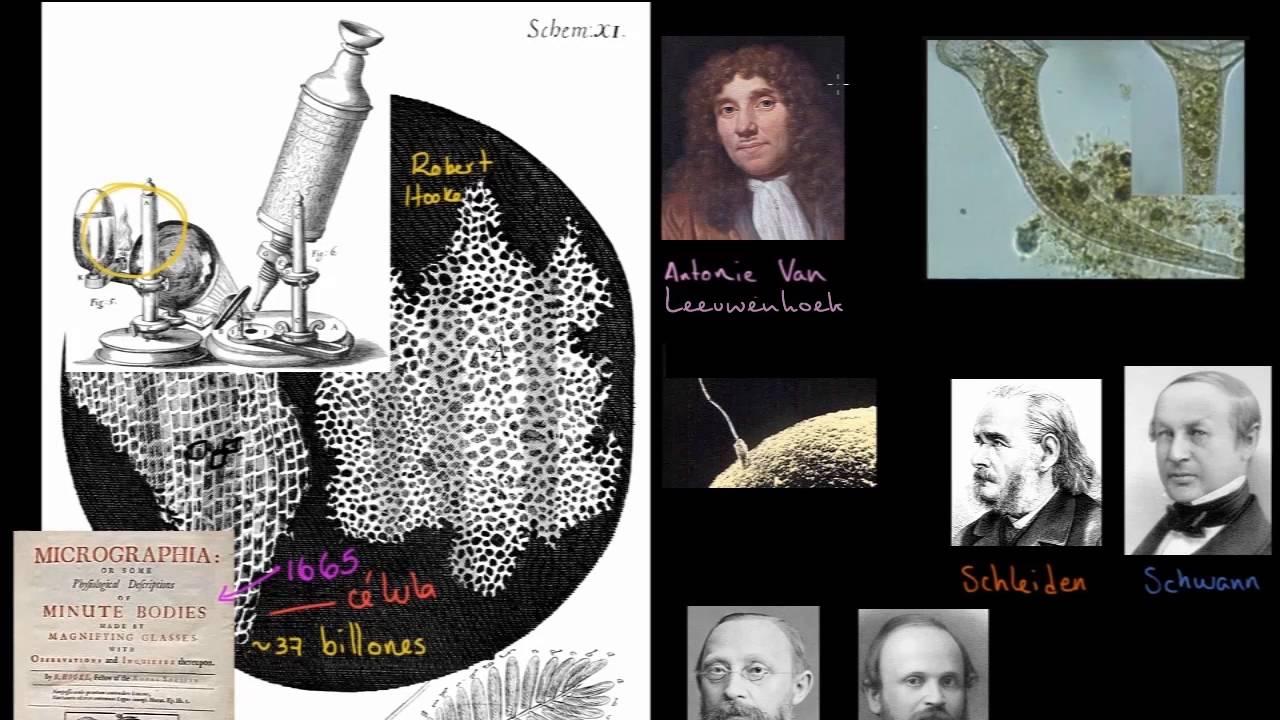 Teoría Celular La Estructura De Una Célula Biología Khan Academy En Español