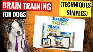 Brain Training For Dogs Review - Secrets to dog training