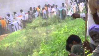 bull races punj india 4