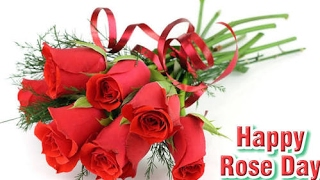 Happy Rose Day 2017: Importance of Each Rose Colour with Meaning