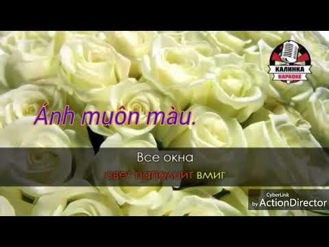 Hoa hồng trắng (karaoke tone nam)
