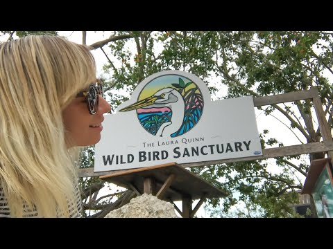 Florida Keys Laura Quinn Wild Bird Sanctuary | Key Largo Unique Things To Do