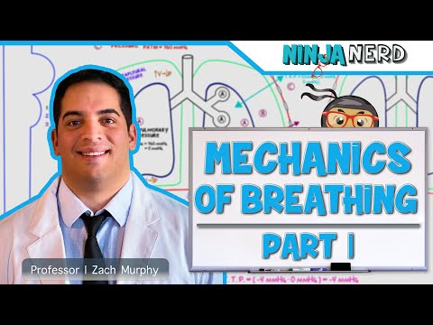 Respiratory | Mechanics of Breathing: Pressure Changes | Part 1