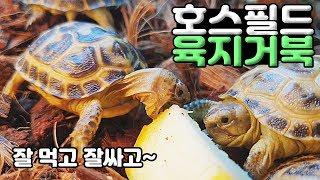 한국인에게 가장 적합한 거북이를 알아봅니다