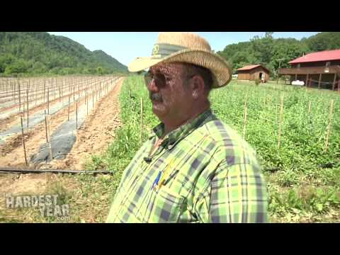 After Tobacco: In Appalachia, Farmers Hope the Future is Organic