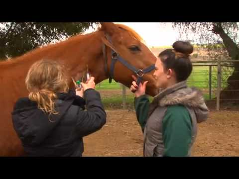 Bachelor Of Equine Science